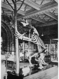 The Megatherium Was a Gigantic Ground Sloth of the Ice Age, Eighteen Feet in Height Photographic Print
