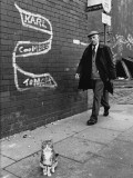 Tabby Cat on the Pavement - Salford 1981 Photographic Print by Shirley Baker
