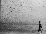 A Swarm of Locusts Wreaks Havoc in Africa Photographic Print
