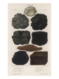 Various Types of Carbon Including Crystallised Diamond, Graphite, Slate Coal and Peat Giclee Print