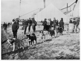 Dogs Hauling Water at Nome, Alaska, During the Gold Rush Photographic Print