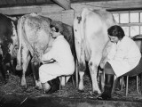 Land Girls Milking Cows at a Dairy Farm in Hartley, Kent During World War II Photographic Print by Robert Hunt
