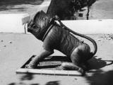 Bulldog Cannon Photographic Print