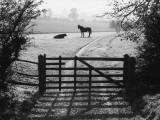 Autumn Animals Photographic Print