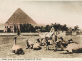 Camel Group Close to the Pyramid of Khufu, Egypt Photographic Print