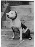 Champion Gentleman Jim Owner: Mallen Photographic Print
