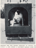 Dog Inside Gas-Proof Kennel Photographic Print