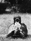 Radio-Control Tortoise Photographic Print