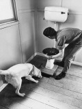 An Excited Army Sniffer Dog Sniffs under the Floorboards Near the Toilet Photographic Print