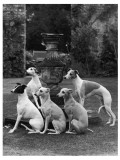 A Group of Seagift Whippets around a Fountain. Owned by Whitwell Photographic Print