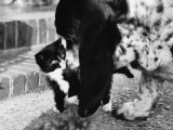 A Kitten Encounters its First Dog! Photographic Print