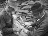 Castrating a Lamb on Welsh Farm, Caernarvonshire, Wales Photographic Print