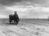 Horse and Cart on Sands Photographic Print