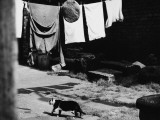 Flat Cap on the Washing Line - Wigan Photographic Print by Shirley Baker