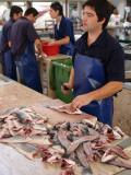 Fish Market, Mercado Dos Lavradores, Funchal, Madeira Photographic Print