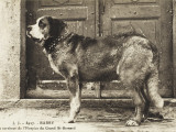 Barry the St Bernard Dog - a Faithful Servant of the Hospice of the Great St Bernard Photographic Print