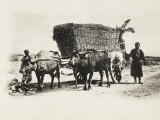 Caucasian Men with Ox Cart Photographic Print
