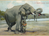 A Temple Elephant with Two Keepers, Sri Lanka Photographic Print
