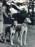 A Smart Young Woman Taking Two Magnificent, Muscular Greyhounds for their Daily Exercise Photographic Print