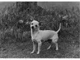 Rozavel Hasta La Vista Owner: Gray Photographic Print
