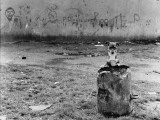 Puppy and Old Dustbin - Manchester 1967 Photographic Print by Shirley Baker