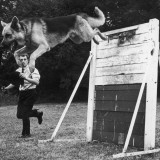 A German Shepherd Police Dog Jumping a Hurdle During a Training Session Photographic Print