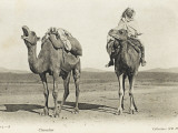 Camels Sharing a Private Joke, Algeria Photographic Print