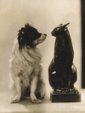 Dog to Cat - Are You Still Not Speaking to Me Photographic Print