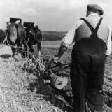Ploughing Contest 1950s Photographic Print by Henry Grant