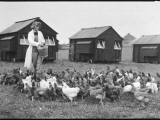 Feeding Hens at the East Sussex School of Agriculture Photographic Print by Henry Grant