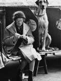 Knitting and the Great Dane - Manchester Dog Show 1966 Photographic Print by Shirley Baker