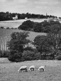 Kentish Countryside Photographic Print