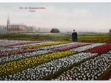 Dutch Tulip Fields Photographie