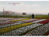 Dutch Tulip Fields Photographic Print