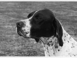 Crufts Winner 1958 Photographic Print