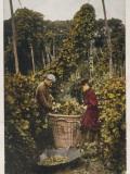 Hop Pickers 1907 Photographic Print