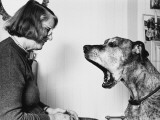 Barbara Woodhouse and Dog Photographic Print
