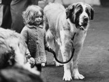 Small Girl with Very Large St. Bernard Dog Photographic Print by Shirley Baker