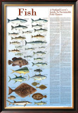 A Seafood Lover's Guide to Sustainable Fish Choices Prints by Brenda Gillespie