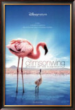 The Crimson Wing: Mystery Of The Flamingos Prints
