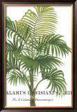 Riviera Palms I Prints