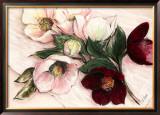Elegant Anemones Posters by Elisabeth Krobs
