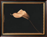 Calla Lily Prints by Talli Rosner-Kozuch