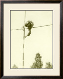 Track and Field, Pole Vault Framed Giclee Print