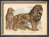 Animaux d'Afrique, Lion Art