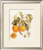 Abricot Peche Posters