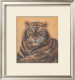 Safari Tiger Prints by Ann Walker