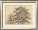 American Sycamore Prints by Able Hotchkiss