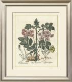 Besler Floral V Art by Besler Basilius