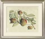 Botanical IV Prints by  Van Rheet